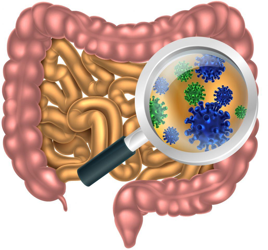 microbiome in intestines
