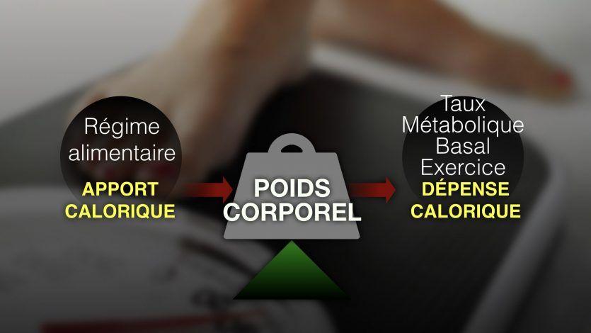 Comprendre les calories