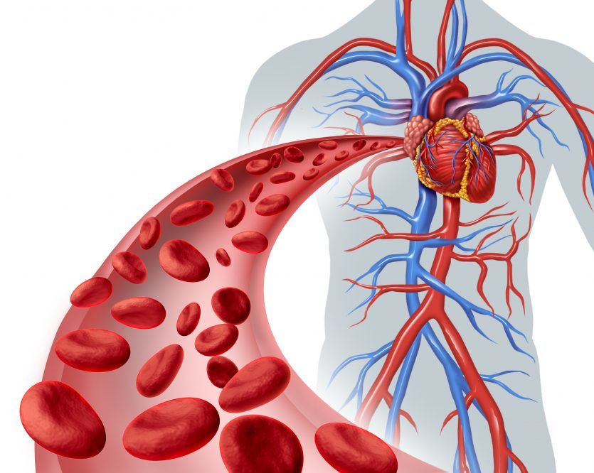 Red Blood Cell Super Highway Navigating The Cardiovascular System