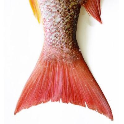 colorful tail of fish on white background