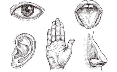 Making Sense of Your Five Senses - Ask The Scientists