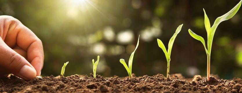 hand planting corn seed
